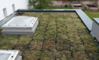 renovation-bbc-extension-toiture-végétalisée